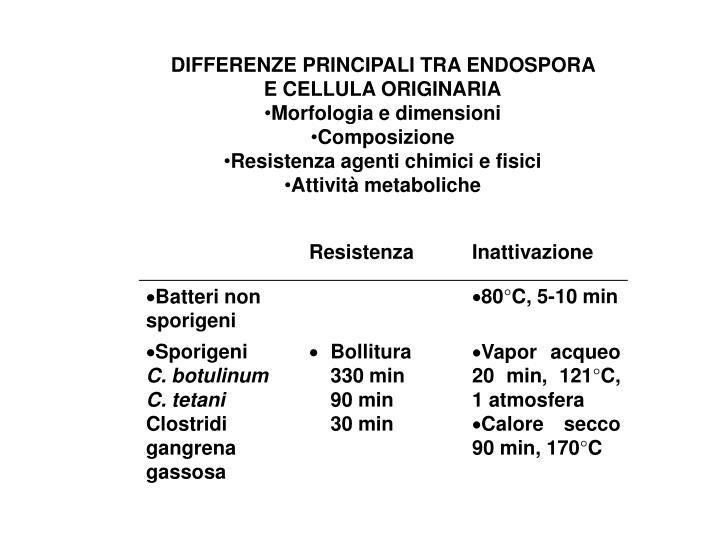 DIFFERENZE PRINCIPALI TRA ENDOSPORA E CELLULA ORIGINARIA