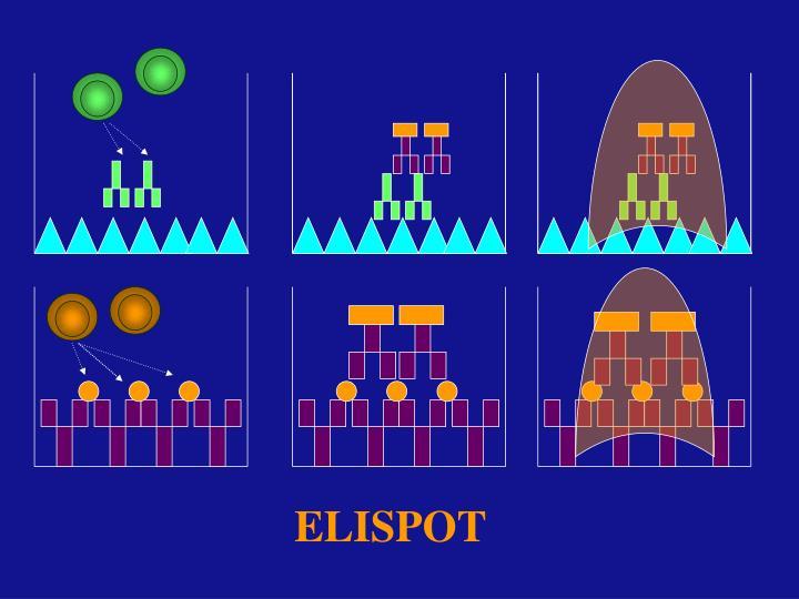 ELISPOT