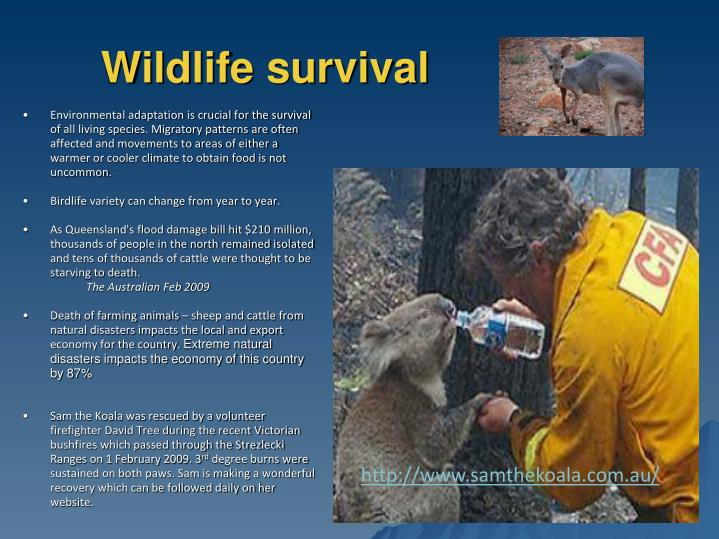 Wildlife survival