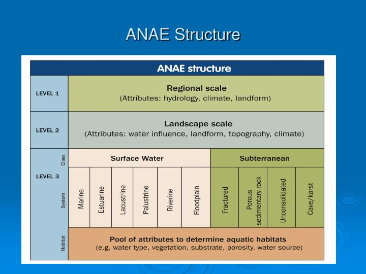 ANAE Structure