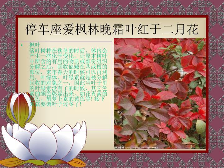 停车座爱枫林晚霜叶红于二月花