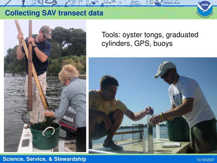 Collecting SAV transect data