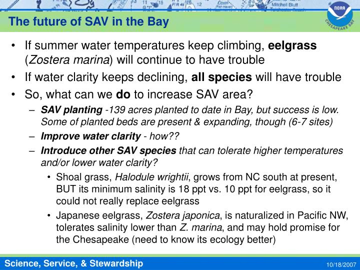 The future of SAV in the Bay