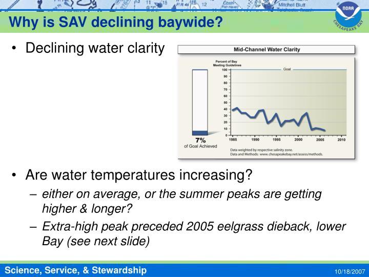 Why is SAV declining baywide?