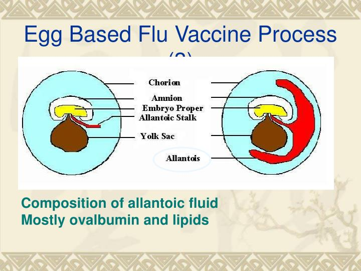 Egg Based Flu Vaccine Process (3)
