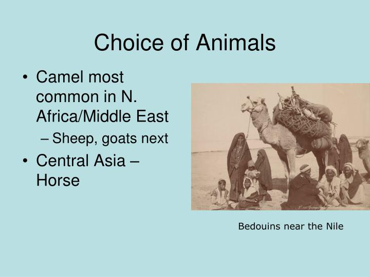 Choice of Animals