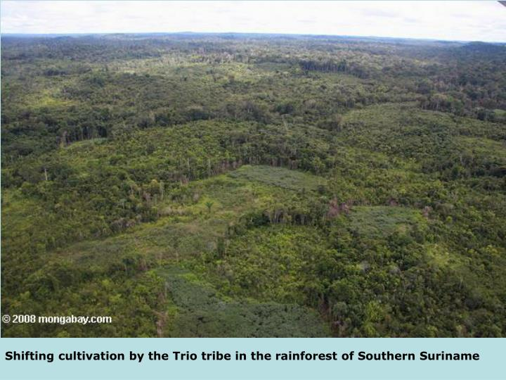 Shifting cultivation by the Trio tribe in the rainforest of Southern Suriname