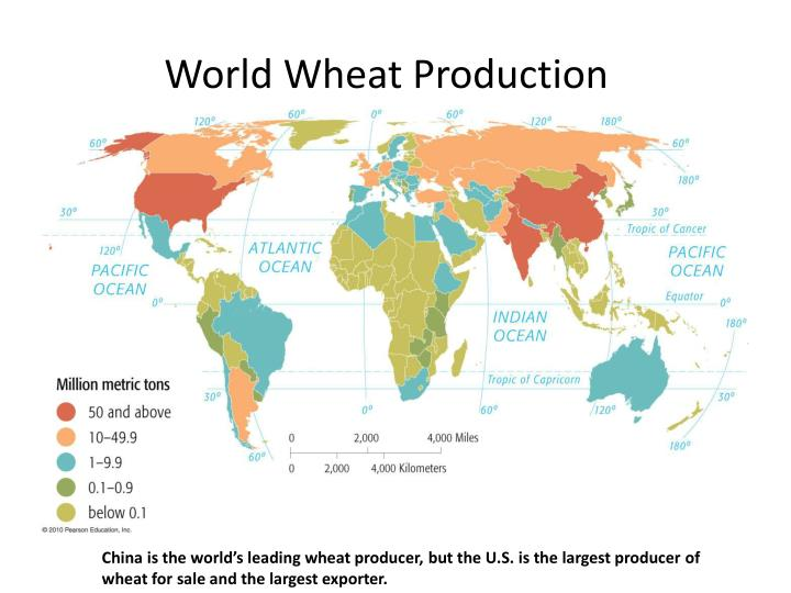 World Wheat Production