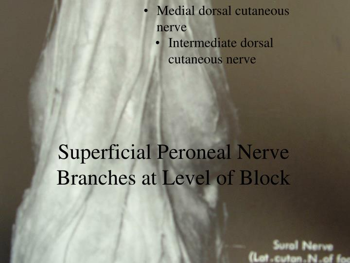 Medial dorsal cutaneous nerve