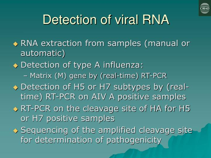 Detection of viral RNA