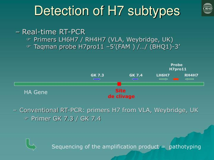 Detection of H7 subtypes