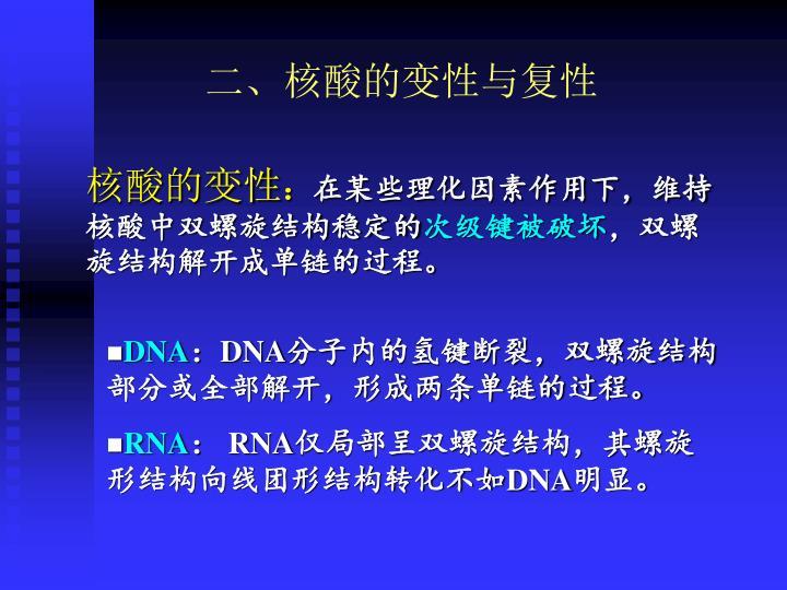二、核酸的变性与复性
