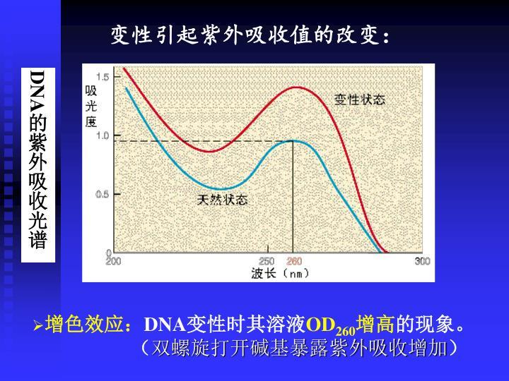 变性引起紫外吸收值的改变: