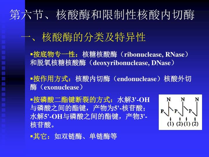 第六节、核酸酶和限制性核酸内切酶