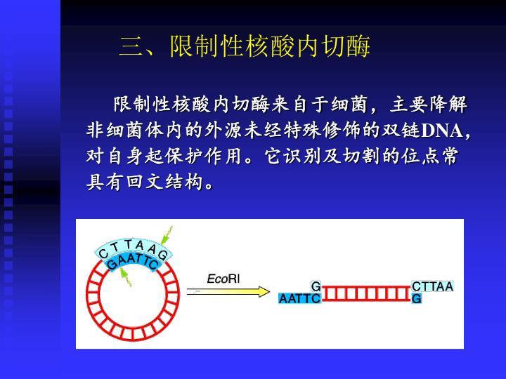 三、限制性核酸内切酶