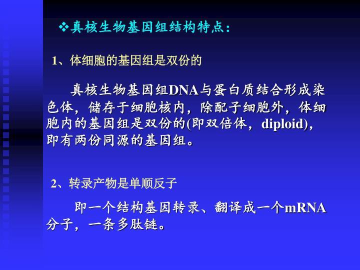 真核生物基因组结构特点: