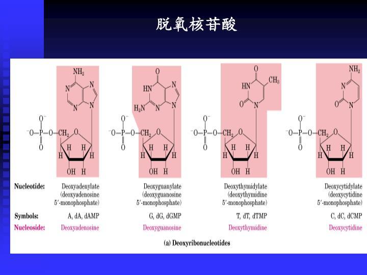 脱氧核苷酸