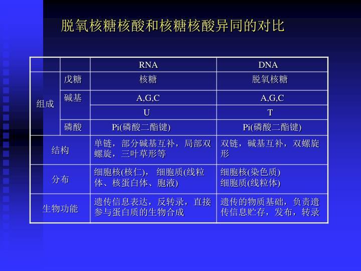 脱氧核糖核酸和核糖核酸异同的对比