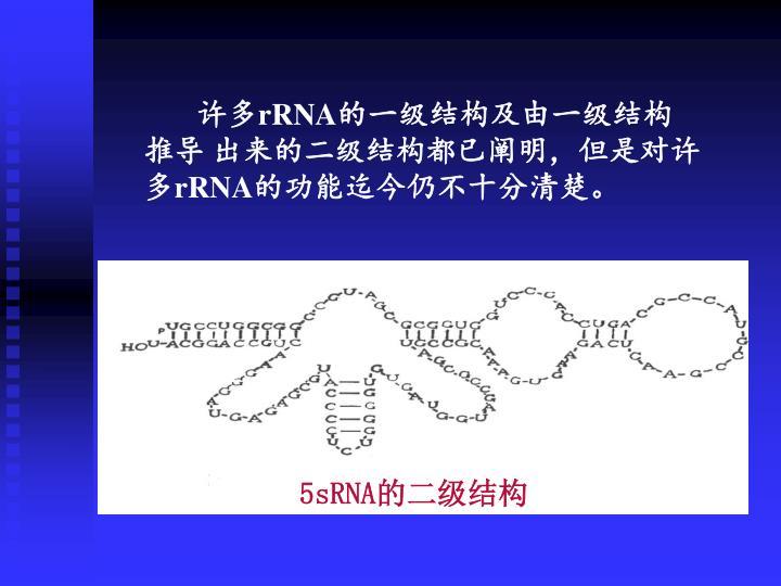 5sRNA