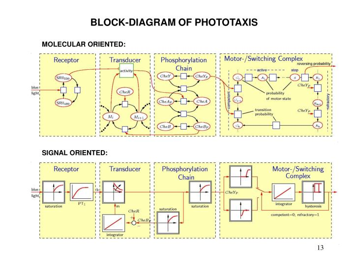 BLOCK-DIAGRAM OF PHOTOTAXIS