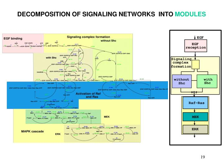 DECOMPOSITION OF SIGNALING NETWORKS  INTO
