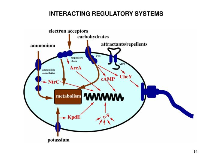 INTERACTING REGULATORY SYSTEMS