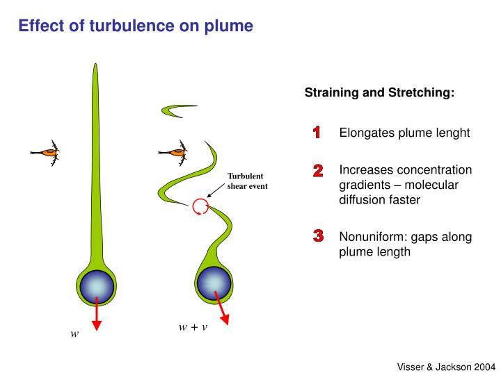 Effect of turbulence on plume