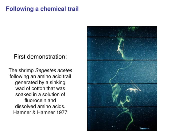 Following a chemical trail