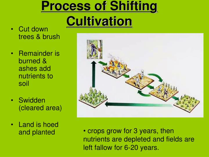 Process of Shifting Cultivation