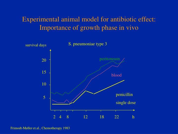 Experimental animal model for antibiotic effect: