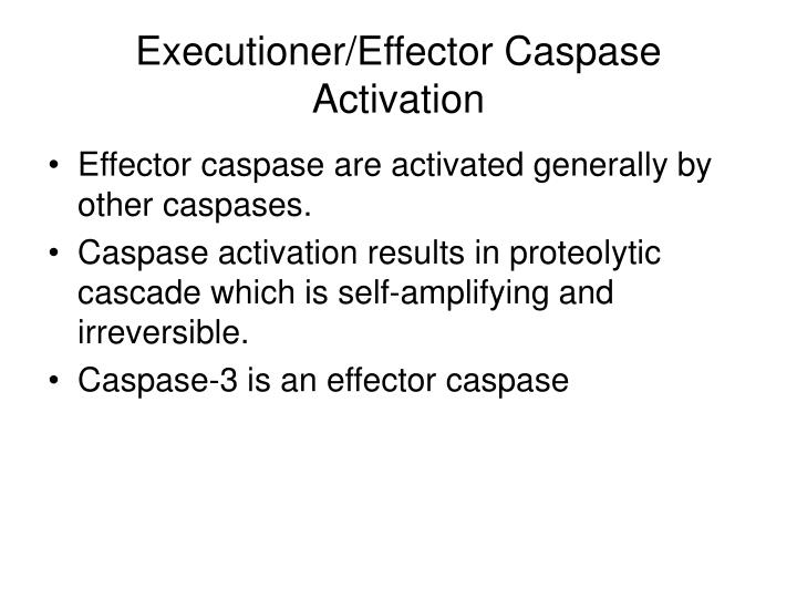 Executioner/Effector Caspase Activation