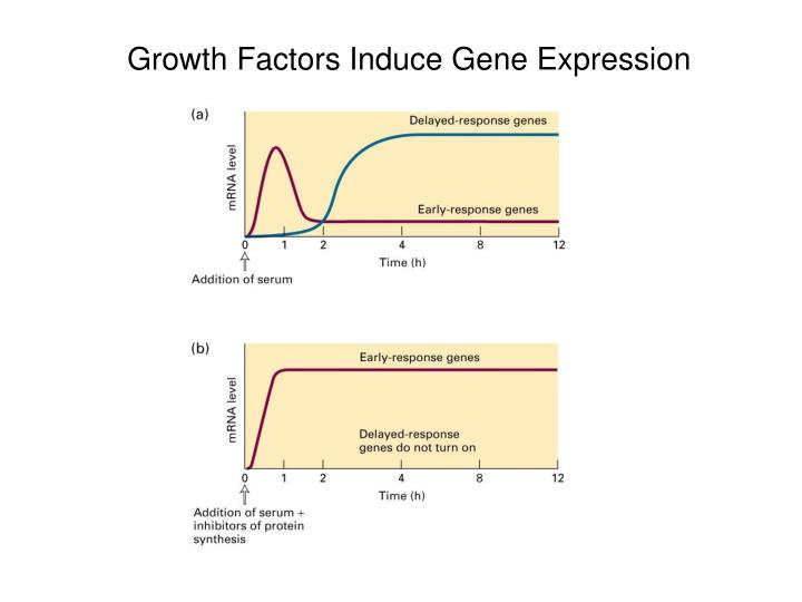 Growth Factors Induce Gene Expression