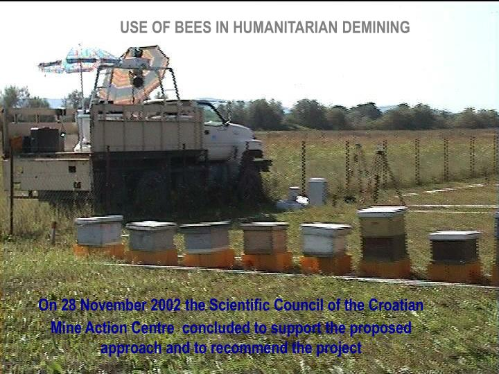USE OF BEES IN HUMANITARIAN DEMINING