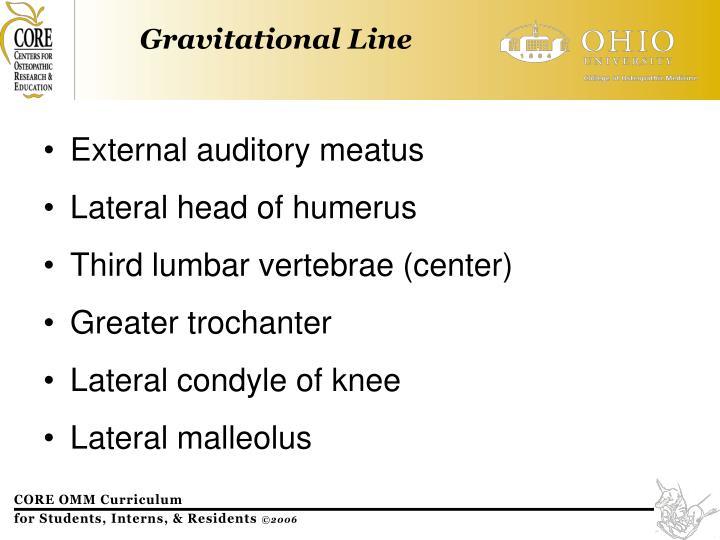 External auditory meatus
