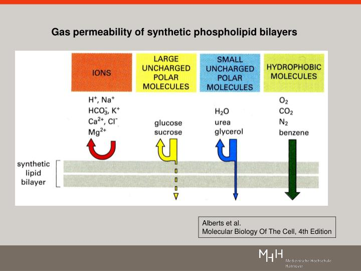 Gas permeability of synthetic phospholipid bilayers