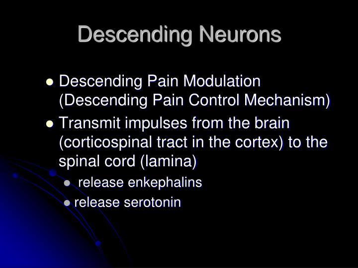 Descending Neurons