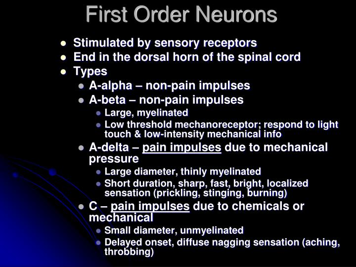 First Order Neurons