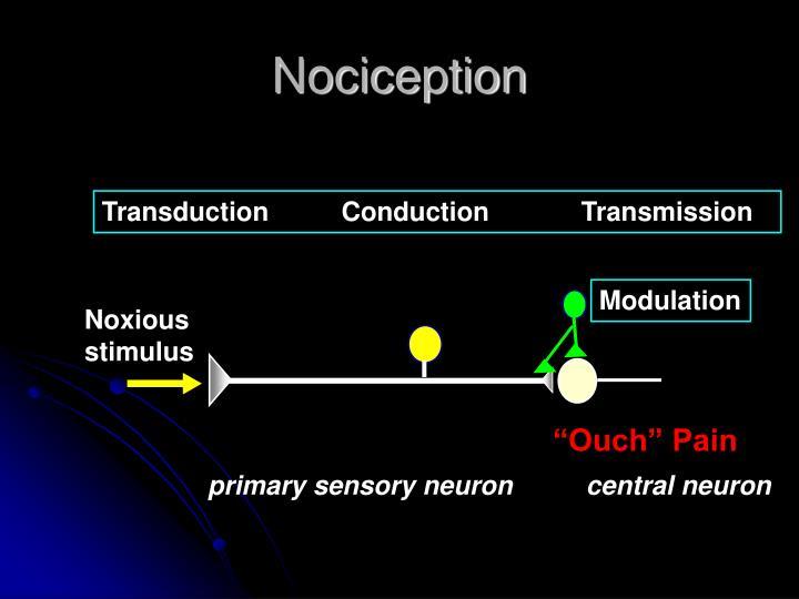 Nociception