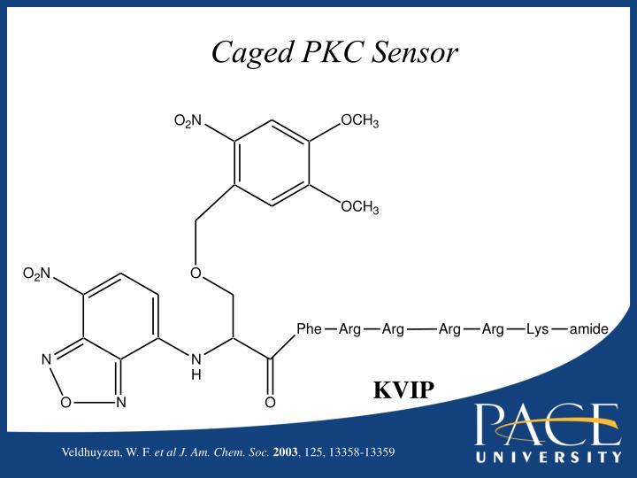 Caged PKC Sensor