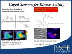 caged sensors for kinase activity