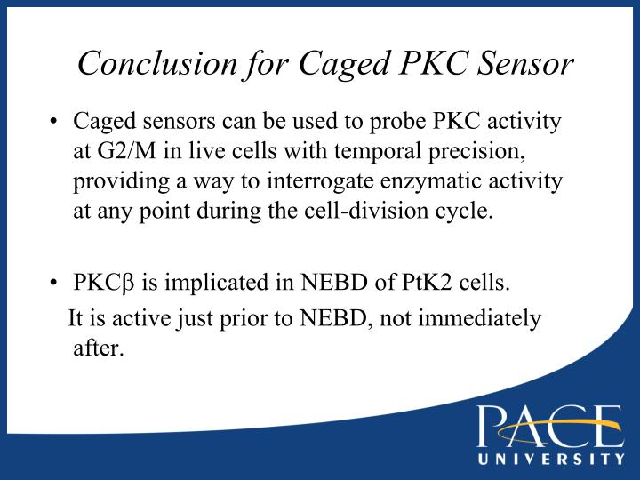 Conclusion for Caged PKC Sensor
