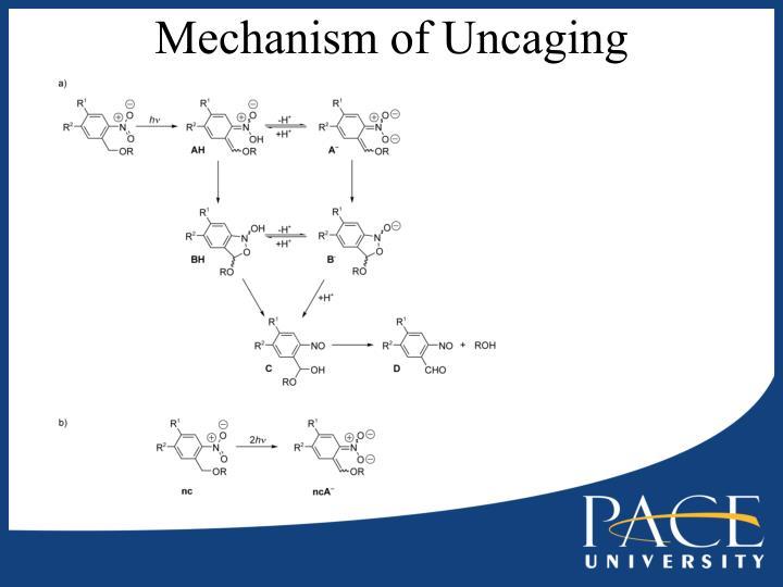 Mechanism of Uncaging