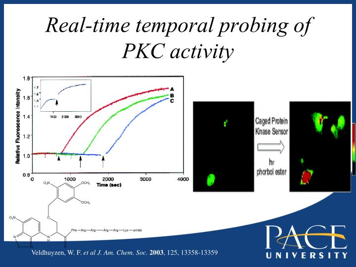 Real-time temporal probing of  PKC activity