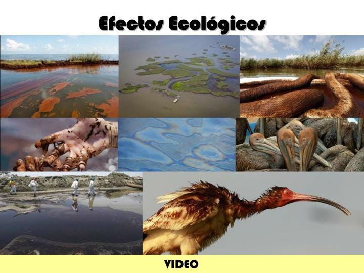Efectos Ecológicos