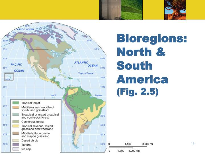 Bioregions: