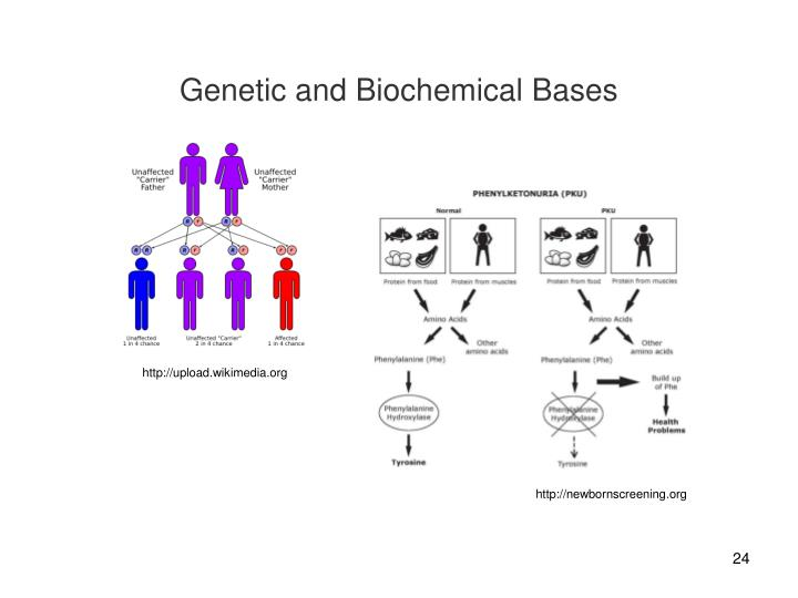 Genetic and Biochemical Bases