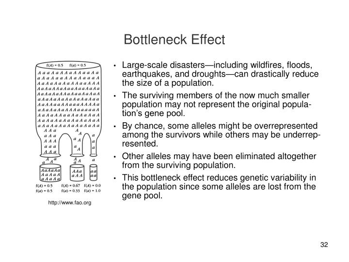 Bottleneck Effect