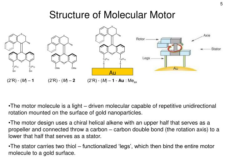 Structure of Molecular Motor