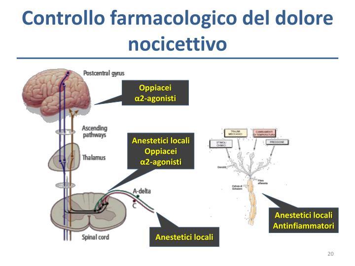 Controllo farmacologico del dolore nocicettivo