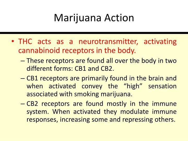 Marijuana Action